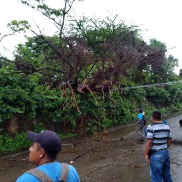 Protección Civil de Santa Catarina Masahuat remueven árbol caído
