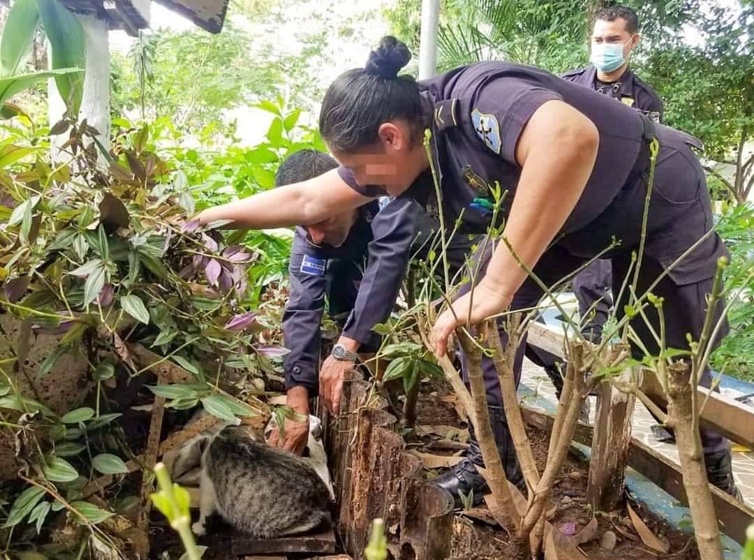 Policías rescatan gatitos en Morazán