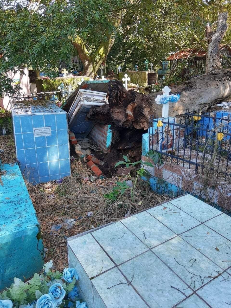 Caída de árbol en un cementerio saca un ataúd con un difunto