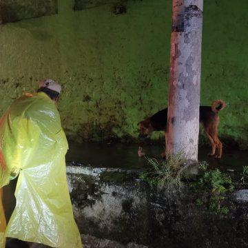 Anciano alimenta a perrito en medio de la lluvia